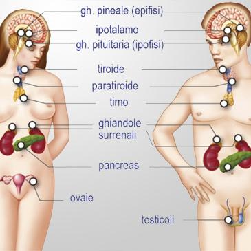 Altre Endocrinopatie